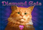 image-diamondcats