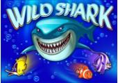 image-wildshark